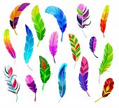 Feather Vector Fluffy Feathering Quil And Colorful Feathery Birds Plume Illustration Set Of Color Fe poster