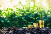 Long-term Investment Or Making Money With The Right Concepts. A Plant Growth On Stack Of Coins On Go poster