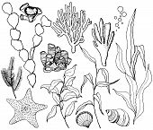 Line Art Vector Underwater Set With Starfish, Shells And Coral Reef Plants. Hand Painted Laminaria,  poster