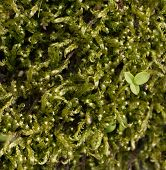 Beautiful Green Moss In Forest. Close Up. Macro. The Moss Grows On A Tree. The Place For The Text. A poster