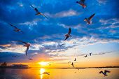 Sunset In The City On The Volga River. Sunset On The River. Seagulls Fly Over The River In The Sunse poster
