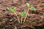 image of cultivation  - Green seedlings in new life concept - JPG