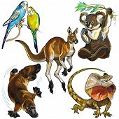 foto of kangaroo  - set with wild animals of australia isolated on white background - JPG