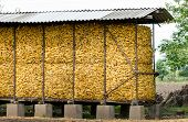 Corn cobs storage