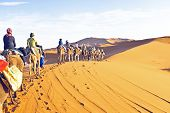 picture of saharan  - Camel caravan going through the sand dunes in the Sahara - JPG