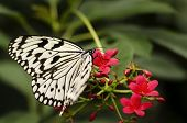 Butterfly in nature setting background