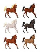 Horses in different colors. Isolated vector animals.