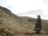foto of yakima  - Fall colors in Yakima - JPG