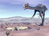 picture of dinosaur-eggs  - Female gigantoraptor dinosaur walking to its nest full of eggs in the desert by day light - JPG