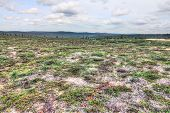 pic of laplander  - Beautiful summer tundra landscape in Lapland Finland