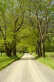 picture of cade  - The famous Sparks Lane in Cades Cove of Great Smoky Mountains - JPG