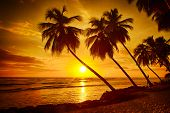 stock photo of caribbean  - Beautiful sunset over the sea with a view at palms on the white beach on a Caribbean island of Barbados - JPG
