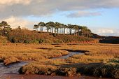 stock photo of marshes  - salt marshes by the River Otter in Devon - JPG