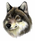 picture of werewolf  - Portrait of realistic wolf on the white background - JPG