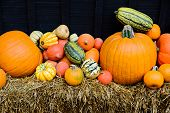 picture of gourds  - A variety of pumpkins - JPG