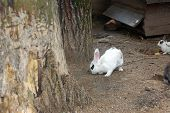 stock photo of foodchain  - Many different rabbit at zoo pose for watching - JPG