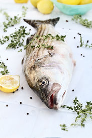 picture of striper  - Freshly caught striped bass being prepared for dinner with extreme shallow depth of field - JPG