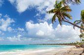 image of atlantic ocean  - Palm tree on sandy beach - JPG