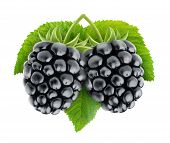 picture of blackberries  - Two blackberries with leaf isolated on white background - JPG