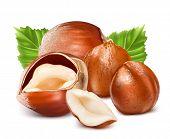 stock photo of hazelnut  - Hazelnuts with leaves - JPG