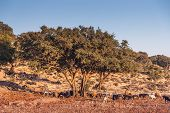 picture of atlas  - Landscape of Morocco at summer - JPG