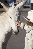 stock photo of burro  - White Baby Burro with young girl in Oatman Arizona USA - JPG