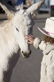 pic of burro  - White Baby Burro with young girl in Oatman Arizona USA - JPG