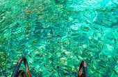 image of phi phi  - Colorful fish in the clear azure water - JPG