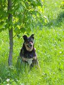 pic of stray dog  - Happy stray dog having rest under a tree shadow - JPG
