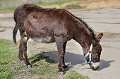 foto of donkey  - bright picture a funny donkey sunny day - JPG