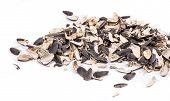 picture of semen  - Bunch of sunflower seeds close up - JPG