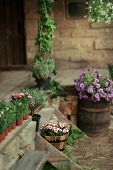 stock photo of flower pot  - in the courtyard of a stone house on the porch with pots of flowers and a big barrel with flowers - JPG