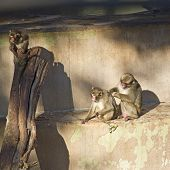 stock photo of zoo  - The beautiful view of a Monkey in a zoo - JPG