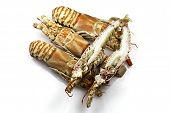 image of carapace  - Champagne lobster - JPG