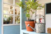 Potted Plant And Watering Can On Light Blue Wooden Veranda Railing Outdoors, Space For Text. Gardeni poster