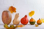 Autumn Composition With Different Varieties Of Pumpkins And Colorful Fall Leaves On White Background poster