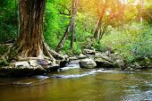 Small Waterfall Background Natural Wonders Thailand River Stream In The Forest poster