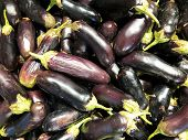 A Bunch Of Ugly Eggplants Are Lying In A Store. Ugly Eggplant Background. poster