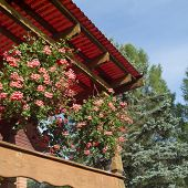 Veranda With Beautiful Red Flowers In Pots, Outdoor Square Shot poster