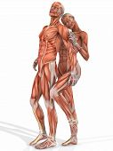 stock photo of male female  - 3 D Render of an Female and Male Anatomic Body - JPG