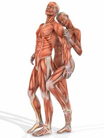 pic of male female  - 3 D Render of an Female and Male Anatomic Body - JPG