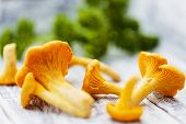 stock photo of chanterelle mushroom  - Chanterelle - JPG