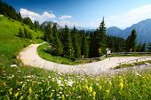 Green meadow and road in Alps in a sunny day. Hohenschwangau region