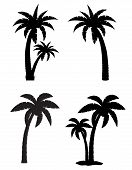 Palm Tropical Tree Set Icons Black Silhouette Vector Illustration