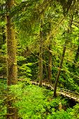 pic of pacific rim  - Wooden path through temperate rain forest - JPG