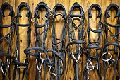 picture of bridle  - Leather horse bridles and bits hanging on wall of stable - JPG