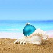 picture of cockle shell  - Christmas ball in a sea shell on the beach - JPG
