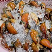 picture of cooked crab  - stone crab claws on a ice in Thailand market - JPG