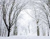 picture of snowy-road  - winter forest  and the road - JPG