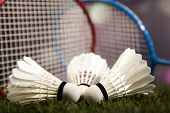 picture of badminton player  - Shuttlecock on badminton racket  - JPG